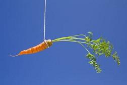 carrot dangling
