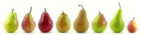 pears in a line